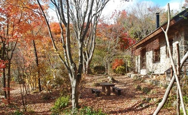 前庭の紅葉2016