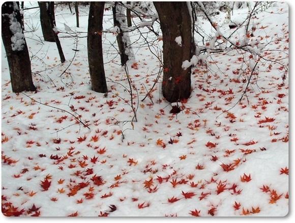 モミジと雪