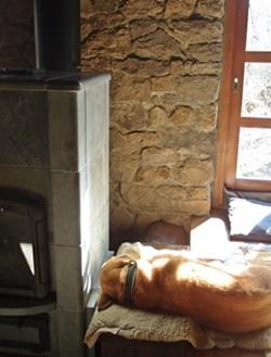 ストーブの横で寝る犬