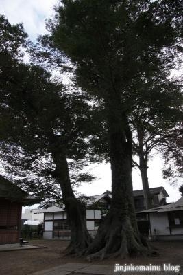 八枝神社(上尾市平方)9