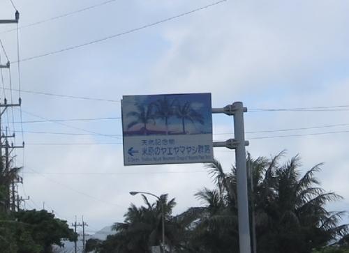 石垣島 ヤエヤマヤシ群落