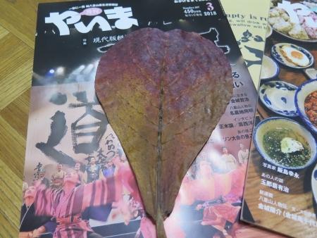 モモタマナの葉っぱ