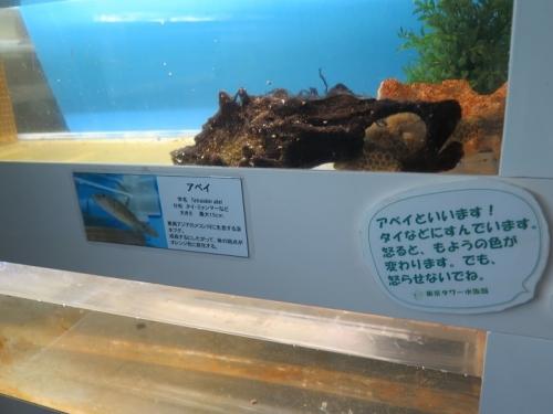 東京タワー水族館 アベイ