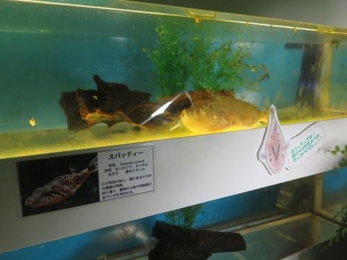 東京タワー水族館 スパッティー