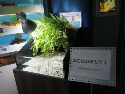 東京タワー水族館 ドクターフィッシュ