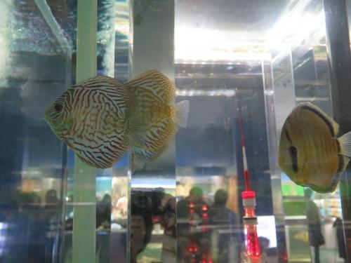 東京タワー水族館 ディスカス