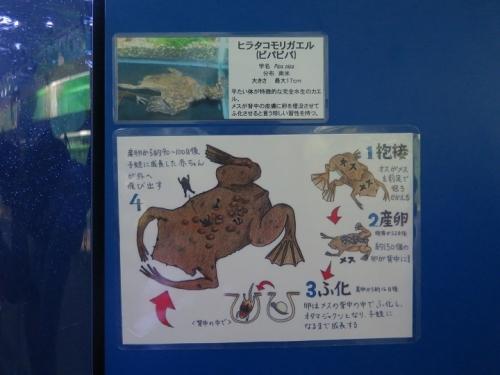 東京タワー水族館 ピパピパ