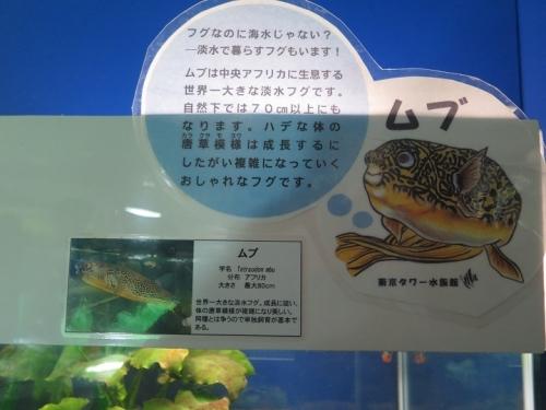 東京タワー水族館 ムブ