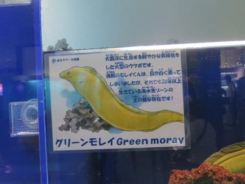東京タワー水族館 グリーンモレイ