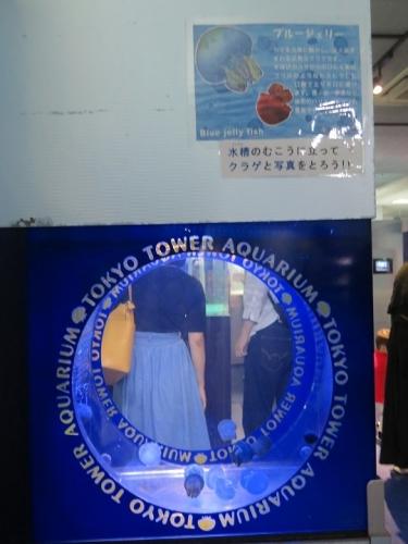 東京タワー水族館 ブルージェリー