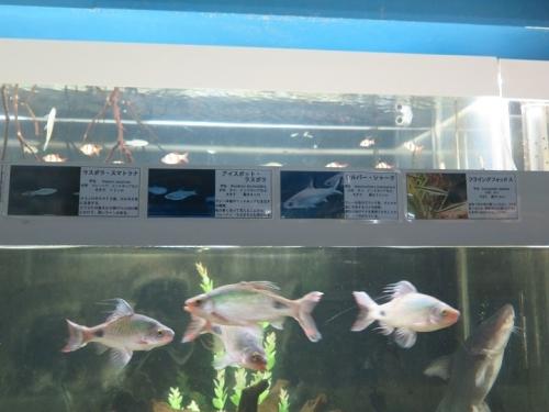 東京タワー水族館 フィラメントーサス