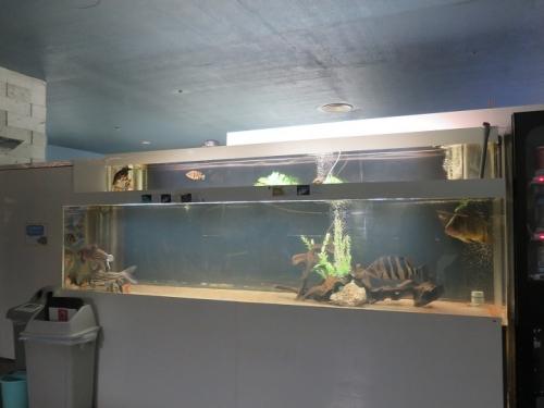 東京タワー水族館 ダトニオプラスワン、メニーバー・タイガー、タイガーバルブ