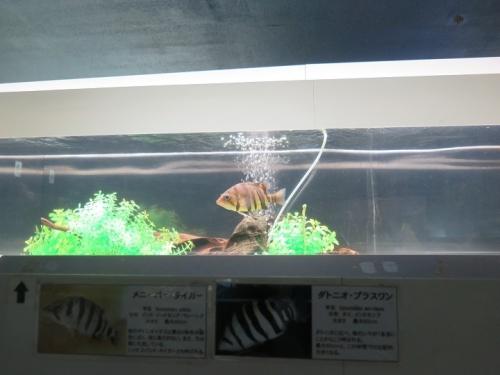 東京タワー水族館 ダトニオ・プラスワン