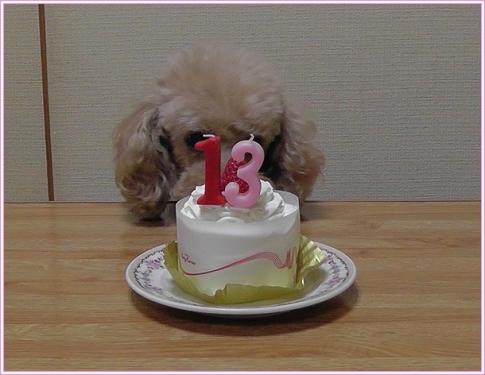 ケーキをガン見