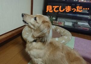 2018_10_17_003ブログ用