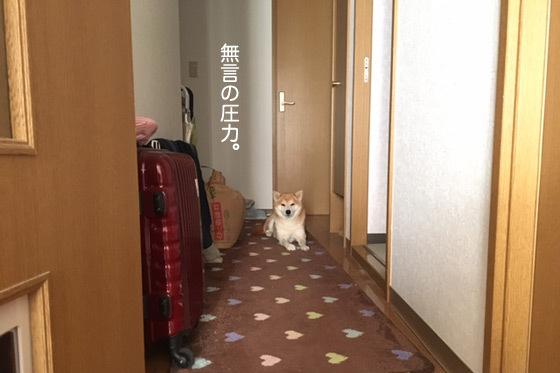 kinako736.jpg