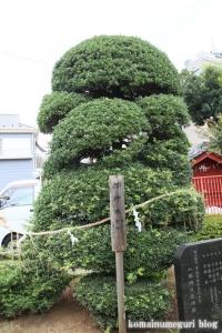 天満宮&八幡神社(さいたま市大宮区大成町)14