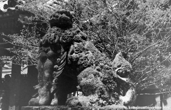 箱根神社(神奈川県足柄下郡箱根町元箱根)1