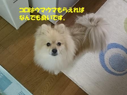 20170101_4.jpg