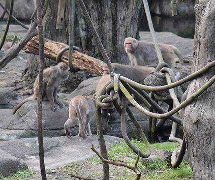 taipeizoo_021_monkey_1601.jpg
