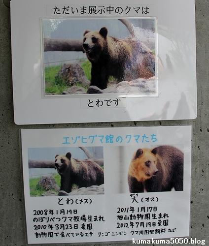 円山動物園_16