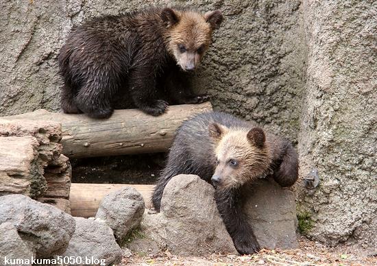 クマの赤ちゃん_11