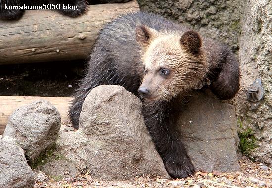 クマの赤ちゃん_12