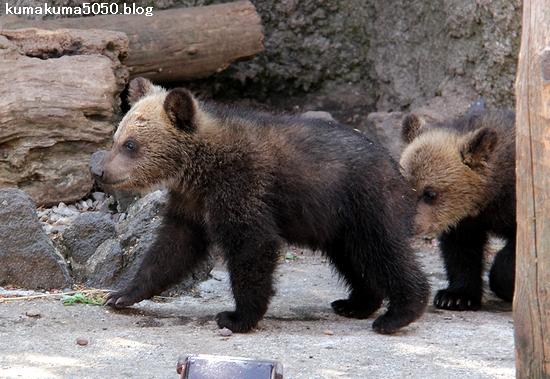 クマの赤ちゃん_14