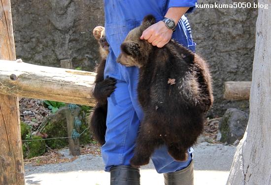 クマの赤ちゃん_17