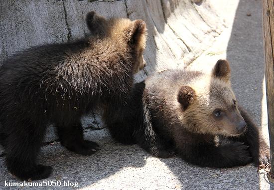 クマの赤ちゃん_18