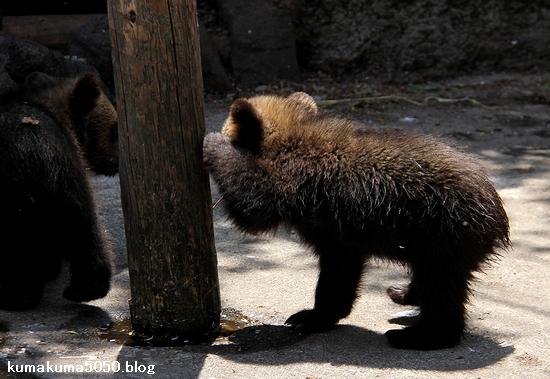 クマの赤ちゃん_20