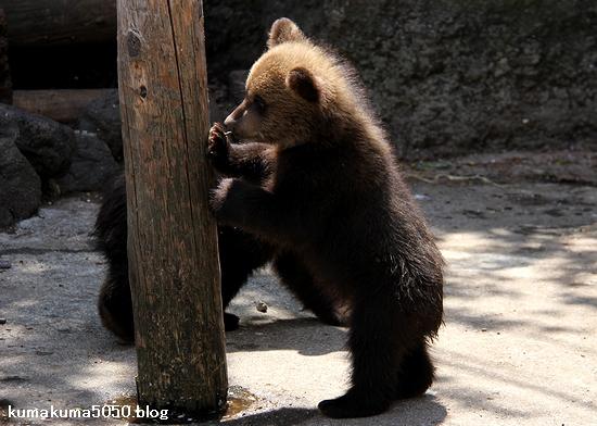 クマの赤ちゃん_21