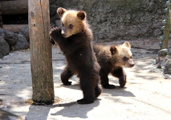 クマの赤ちゃん_22