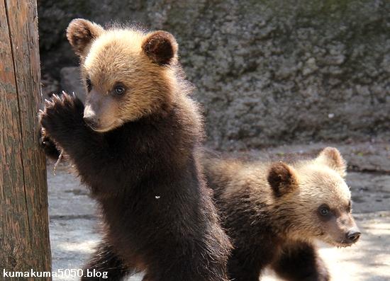 クマの赤ちゃん_23