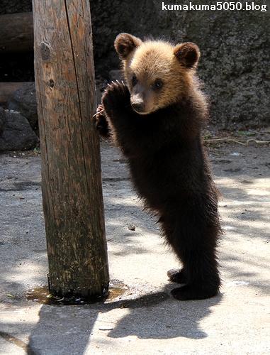 クマの赤ちゃん_24