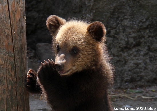 クマの赤ちゃん_25