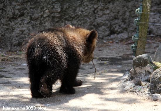 クマの赤ちゃん_28