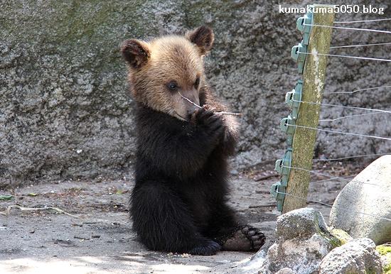 クマの赤ちゃん_29