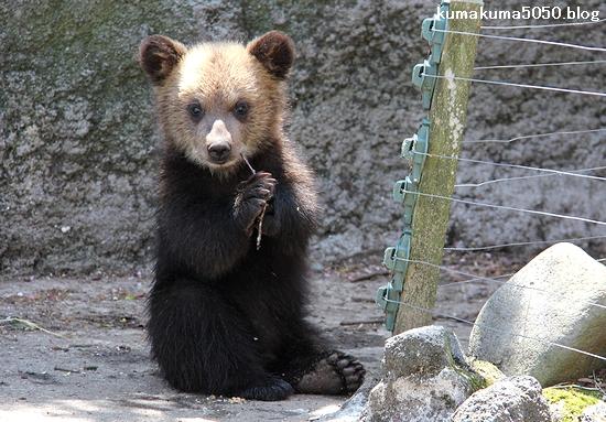 クマの赤ちゃん_30