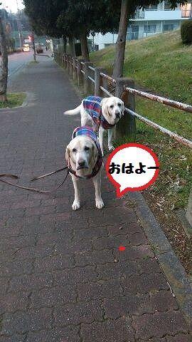 1484875302133.jpg