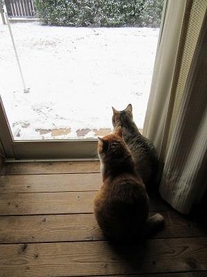 雪ですにゃ~