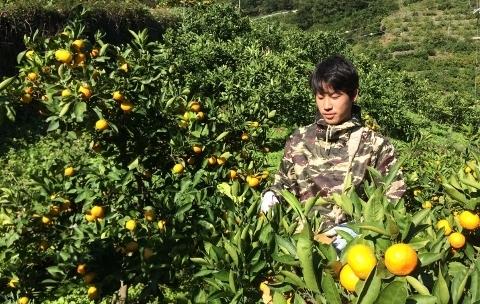 収穫の様子(SEIMA)