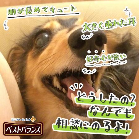 seikaku_shindan_convert_20181116171724.jpg