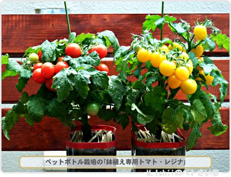 ペット野菜五天王01