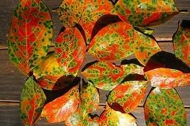 柿の葉2 agemiya