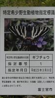 20160603稲子164
