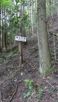 20160603稲子216