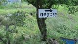 20160603稲子374