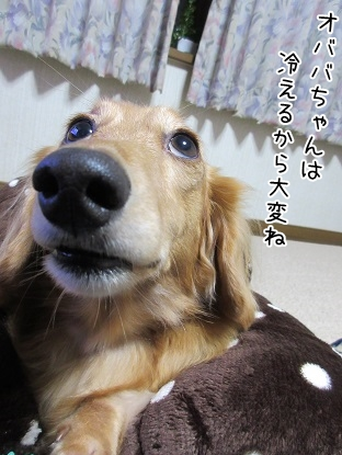 kinako6008.jpg