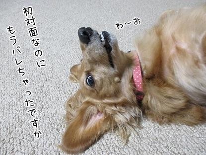 kinako6034.jpg